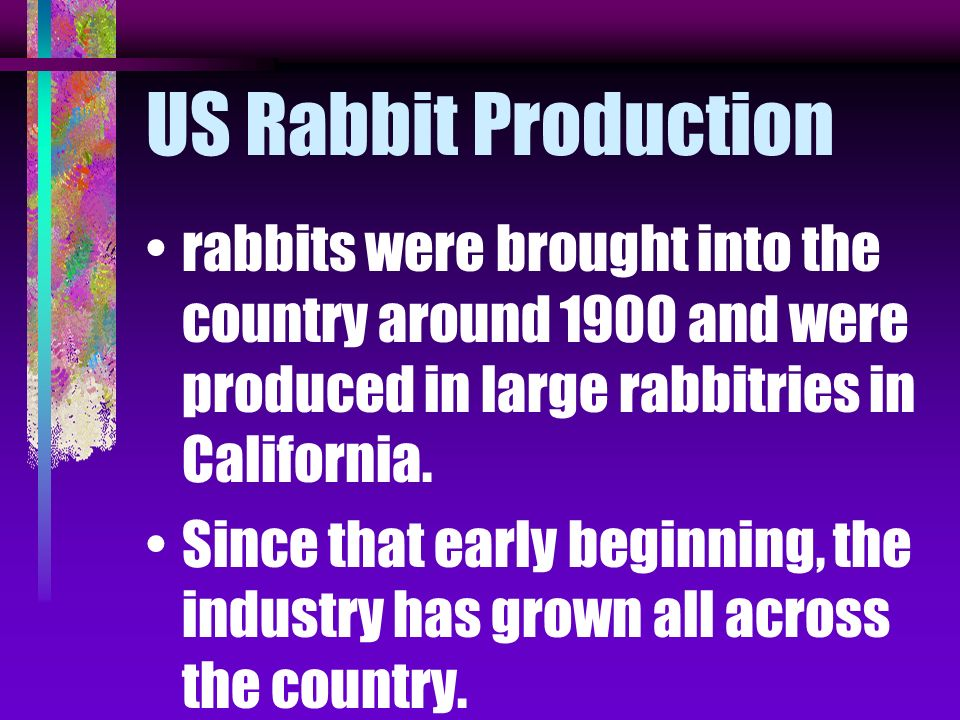 US Rabbit Production rabbits were brought into the country around 1900 and were produced in large rabbitries in California.