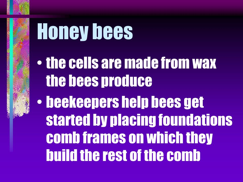 Honey bees the cells are made from wax the bees produce