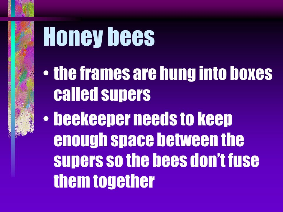Honey bees the frames are hung into boxes called supers