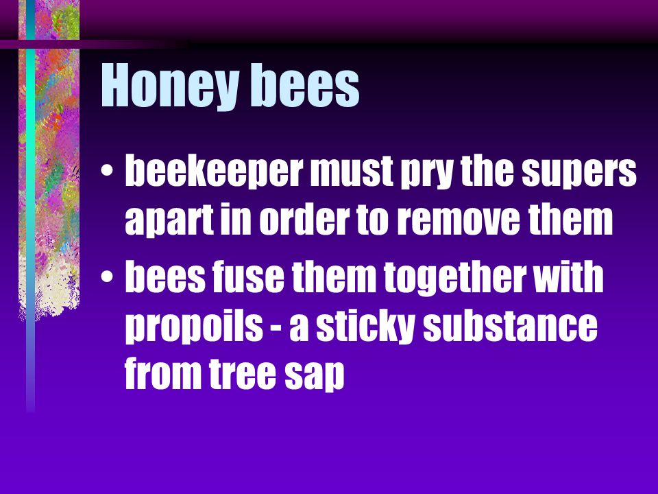 Honey bees beekeeper must pry the supers apart in order to remove them