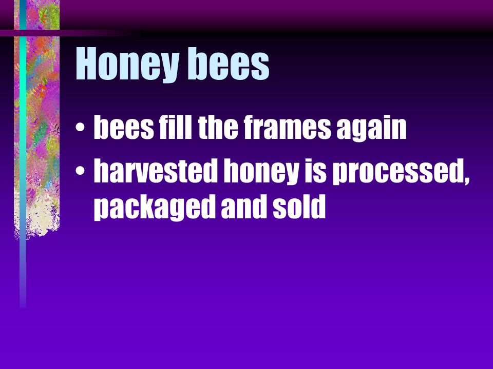 Honey bees bees fill the frames again