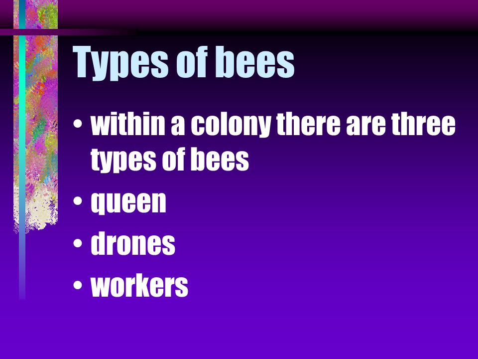 Types of bees within a colony there are three types of bees queen