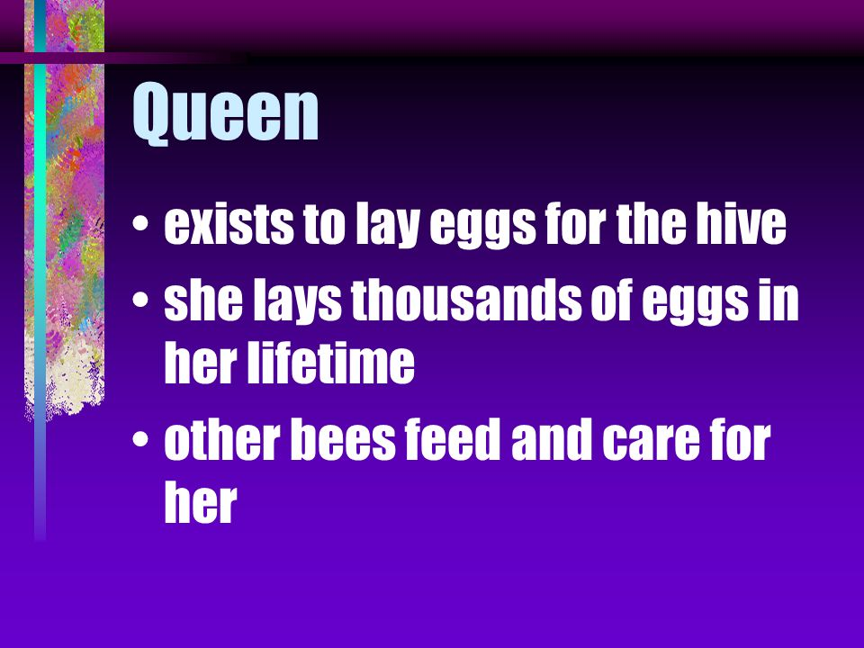 Queen exists to lay eggs for the hive
