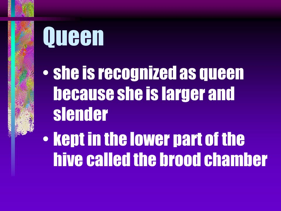 Queen she is recognized as queen because she is larger and slender