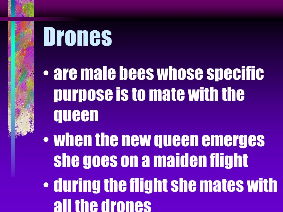 Drones are male bees whose specific purpose is to mate with the queen