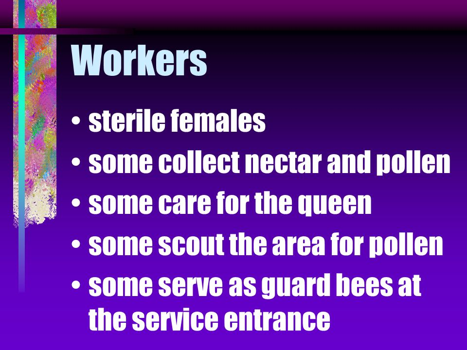 Workers sterile females some collect nectar and pollen