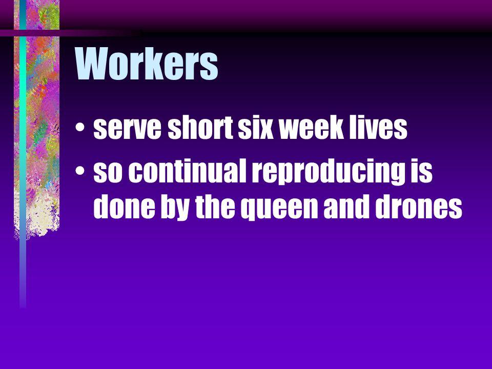 Workers serve short six week lives