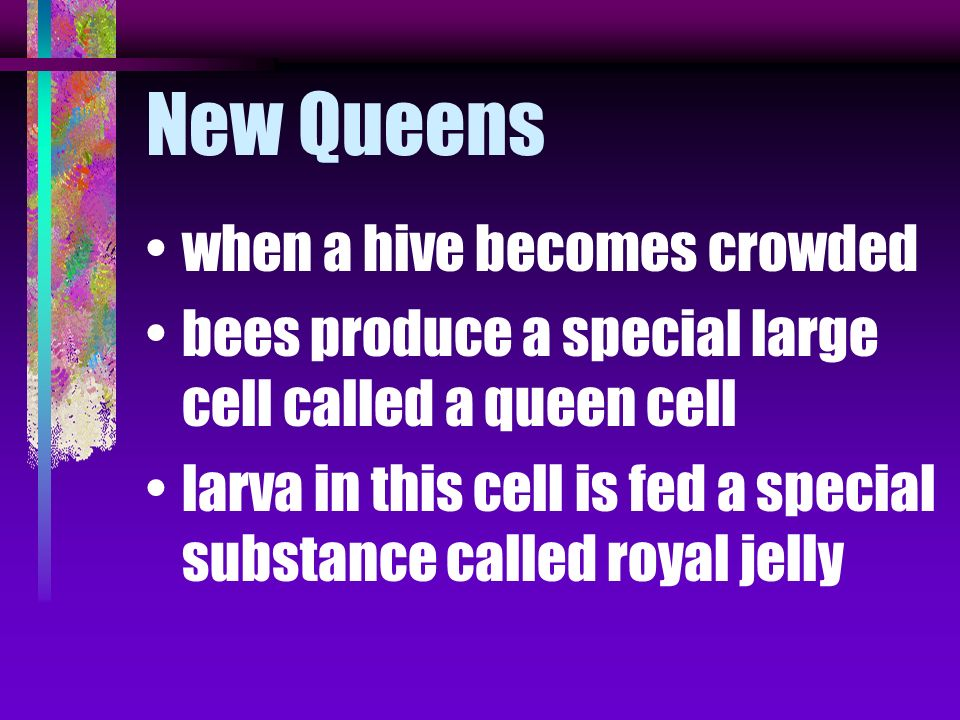 New Queens when a hive becomes crowded