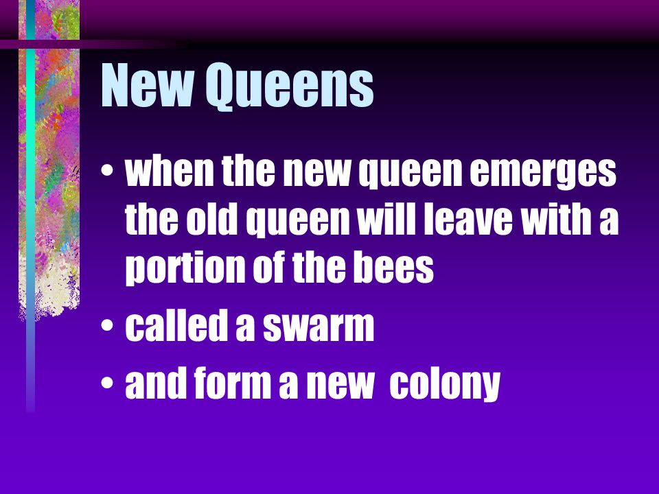 New Queens when the new queen emerges the old queen will leave with a portion of the bees. called a swarm.