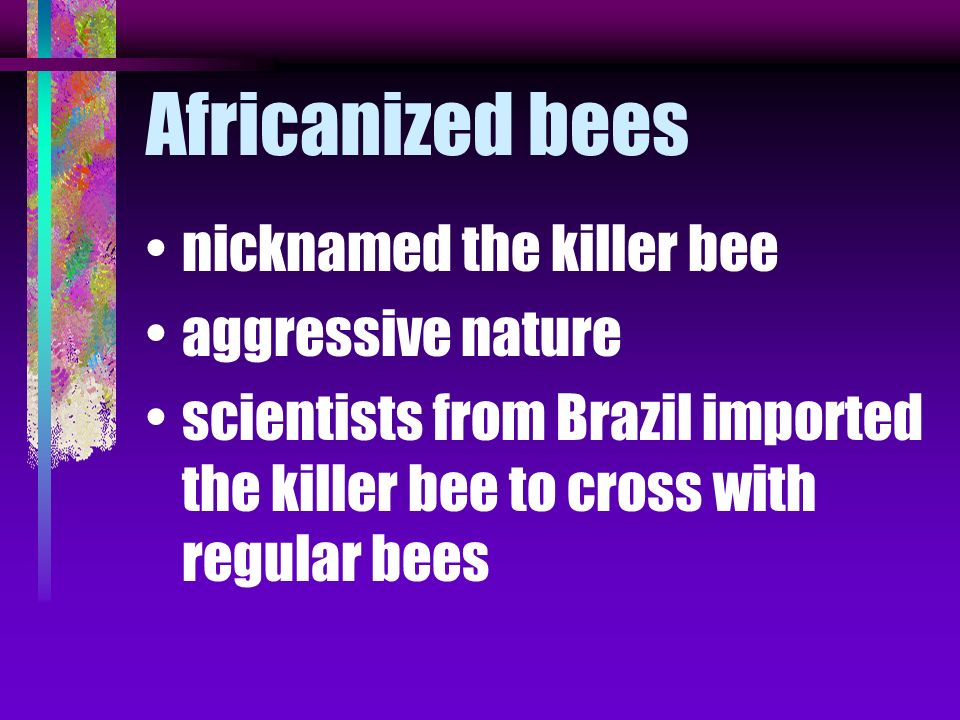 Africanized bees nicknamed the killer bee aggressive nature