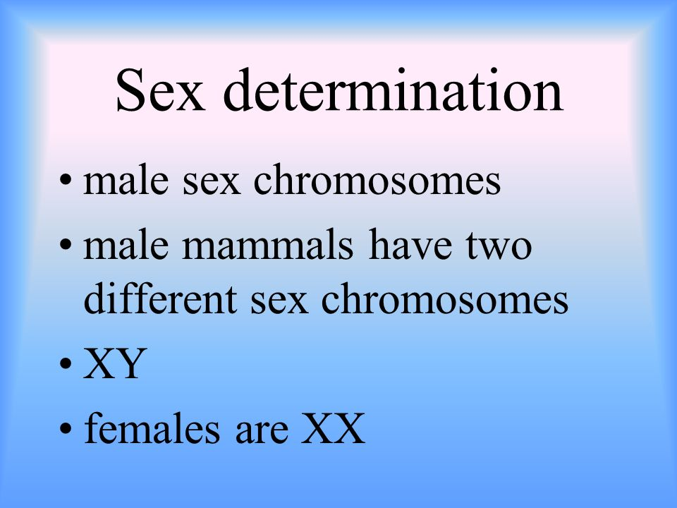 Sex determination male sex chromosomes