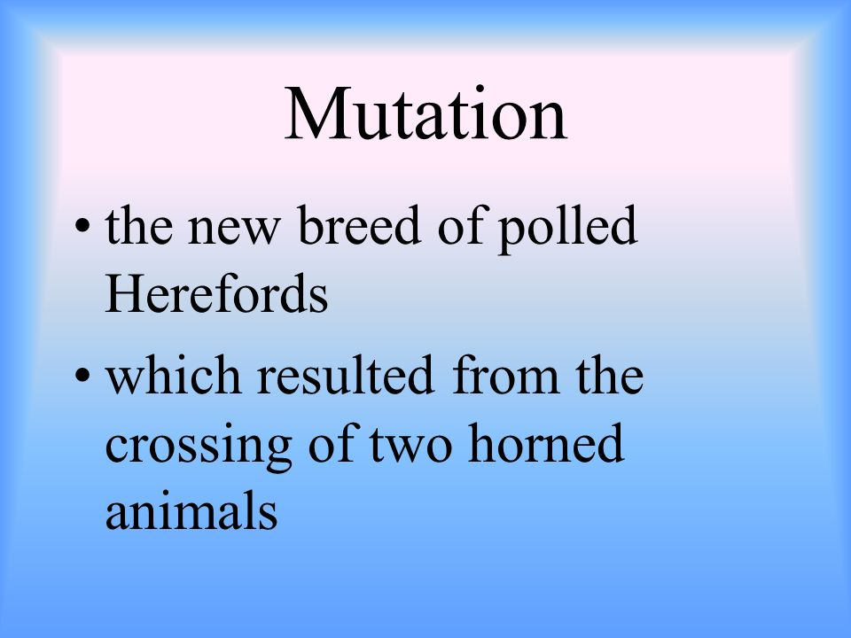 Mutation the new breed of polled Herefords