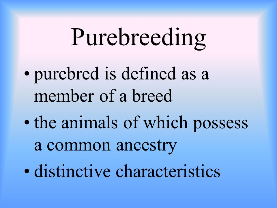 Purebreeding purebred is defined as a member of a breed