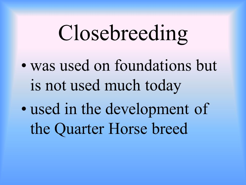 Closebreeding was used on foundations but is not used much today