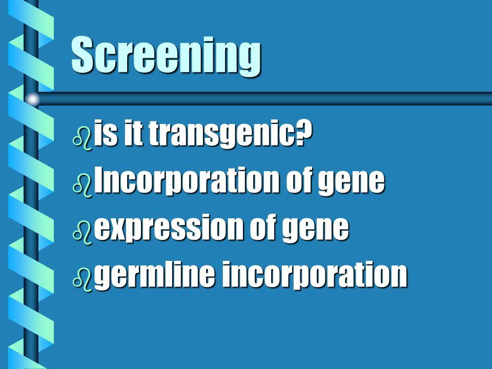 Screening is it transgenic Incorporation of gene expression of gene