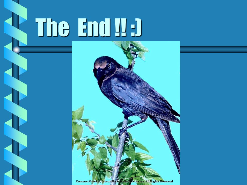 The End !! :)