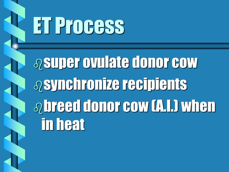 ET Process super ovulate donor cow synchronize recipients