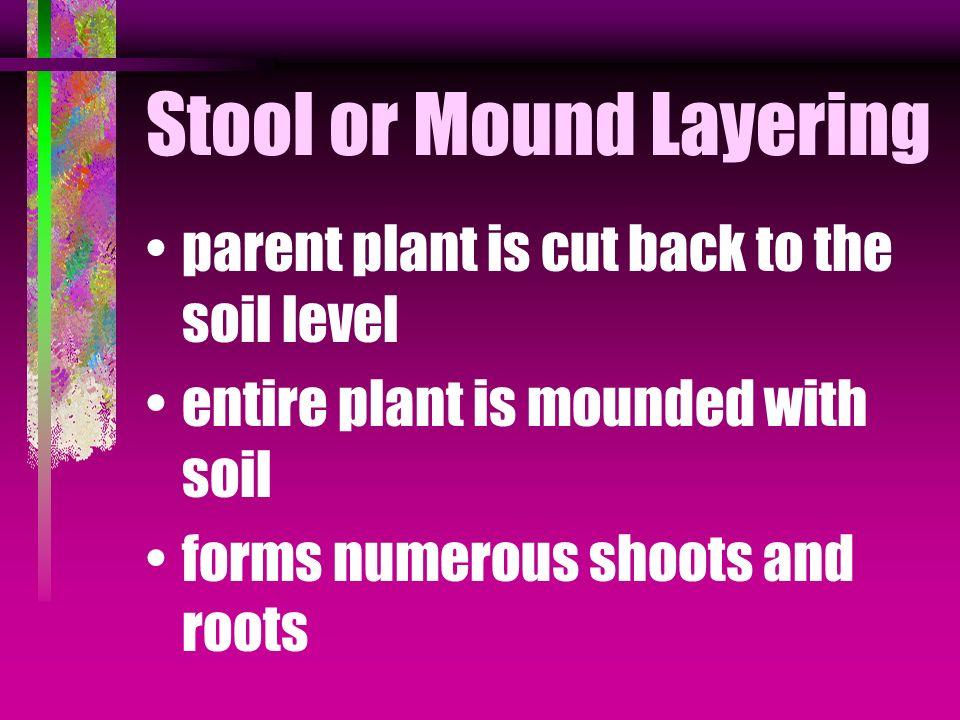 Stool or Mound Layering
