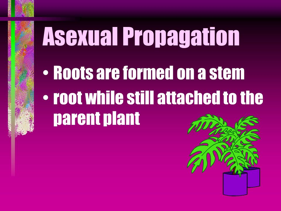 Asexual Propagation Roots are formed on a stem