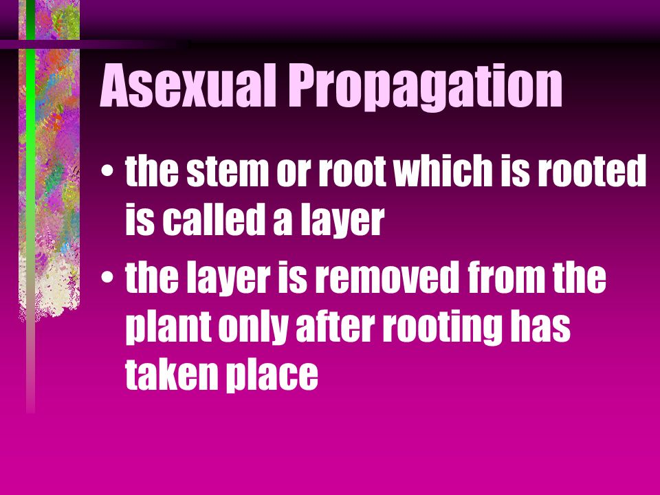 Asexual Propagation the stem or root which is rooted is called a layer