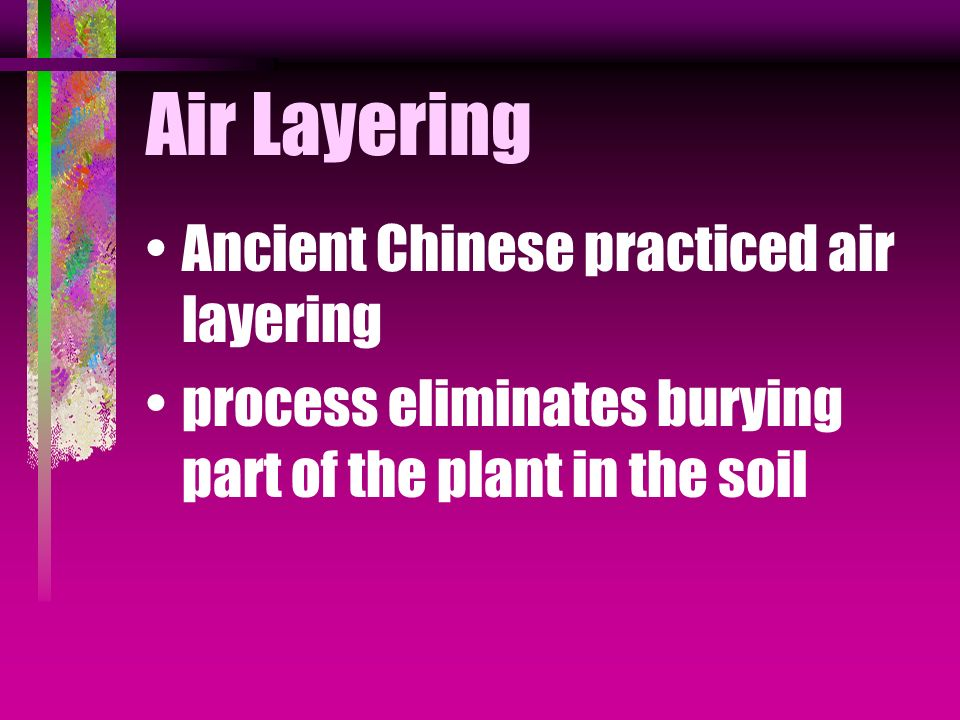 Air Layering Ancient Chinese practiced air layering