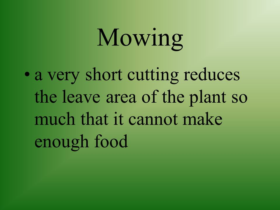 Mowing a very short cutting reduces the leave area of the plant so much that it cannot make enough food.