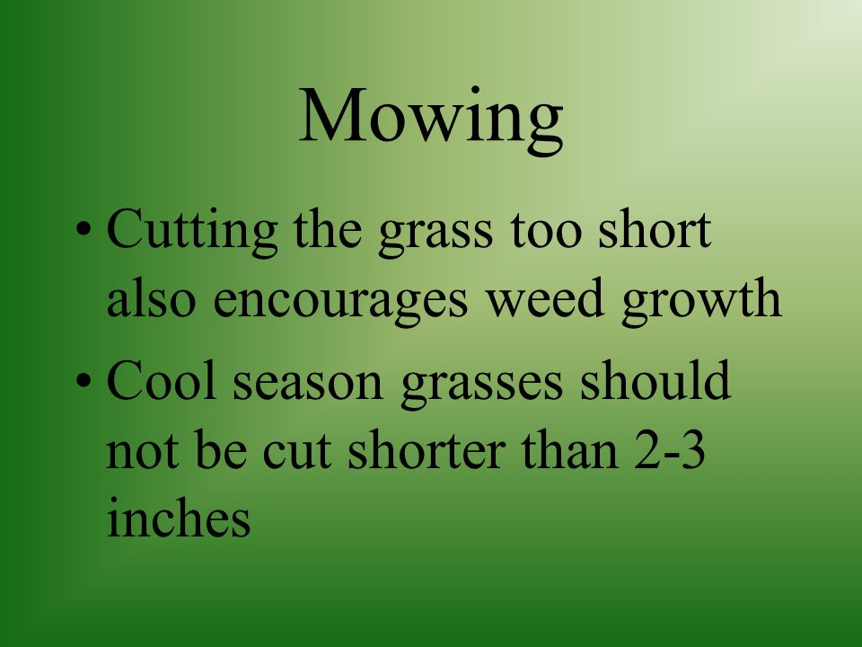 Mowing Cutting the grass too short also encourages weed growth