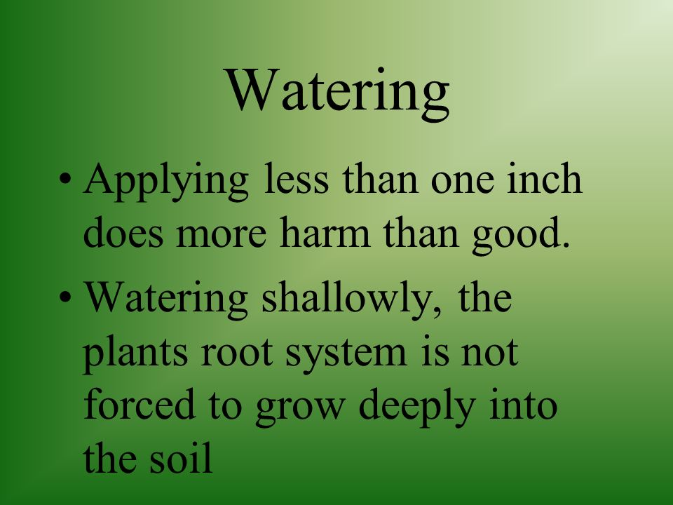 Watering Applying less than one inch does more harm than good.