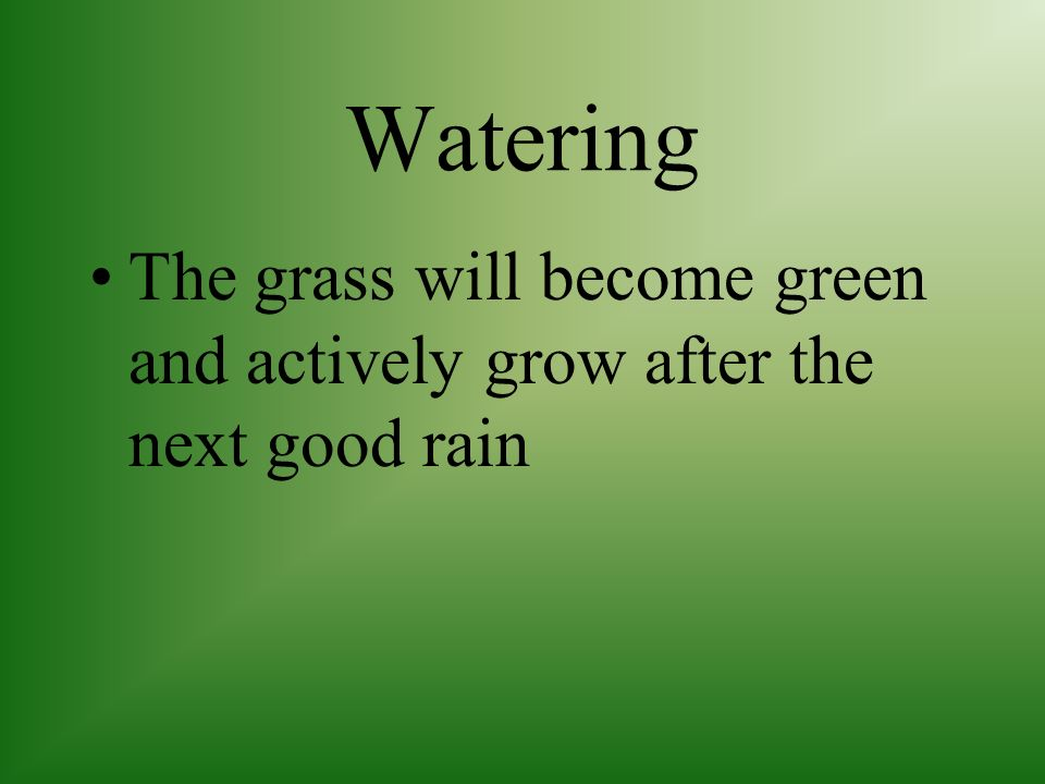 Watering The grass will become green and actively grow after the next good rain