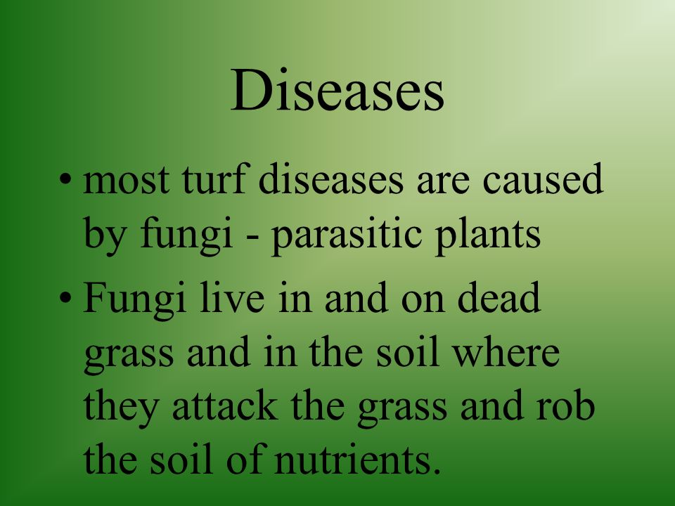 Diseases most turf diseases are caused by fungi - parasitic plants