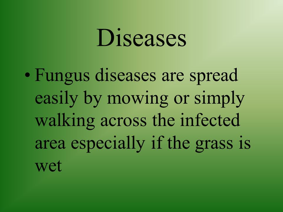 Diseases Fungus diseases are spread easily by mowing or simply walking across the infected area especially if the grass is wet.