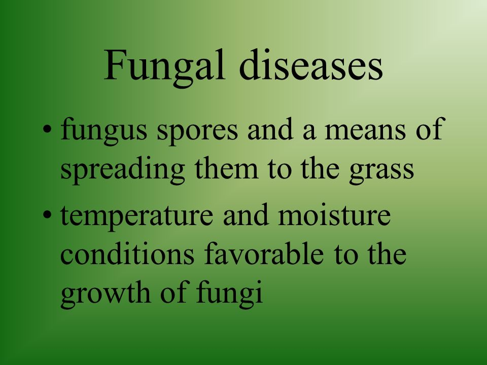 Fungal diseases fungus spores and a means of spreading them to the grass.
