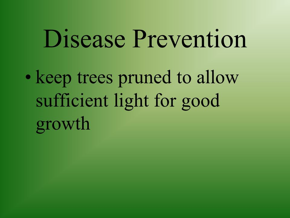 Disease Prevention keep trees pruned to allow sufficient light for good growth