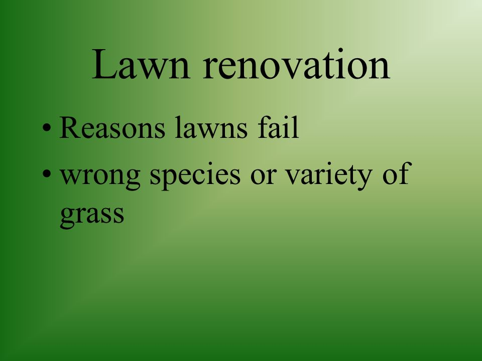 Lawn renovation Reasons lawns fail wrong species or variety of grass