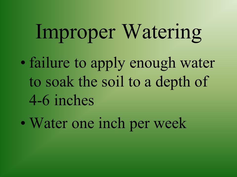Improper Watering failure to apply enough water to soak the soil to a depth of 4-6 inches.