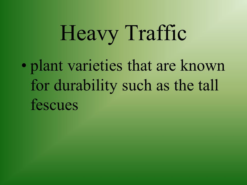Heavy Traffic plant varieties that are known for durability such as the tall fescues