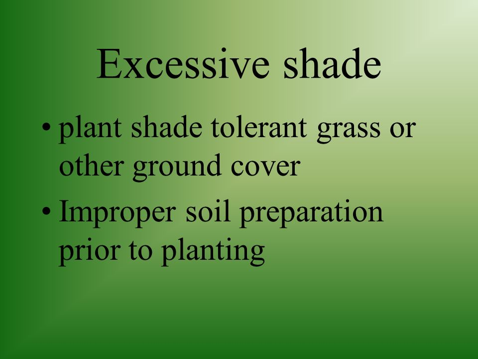 Excessive shade plant shade tolerant grass or other ground cover