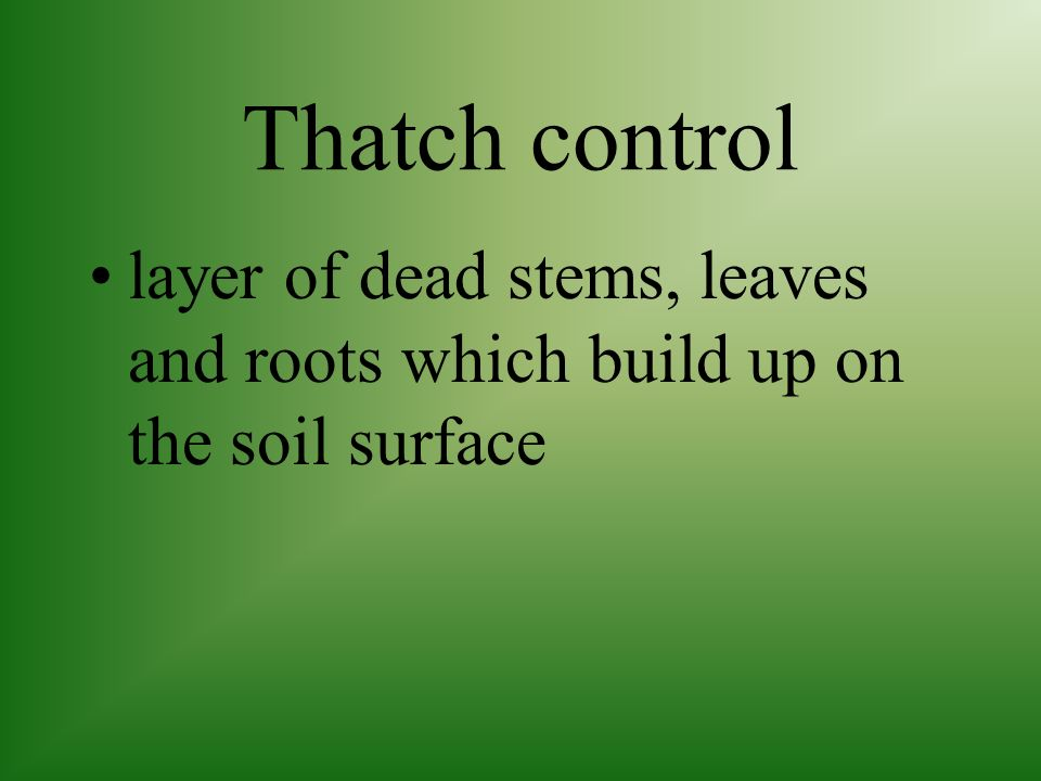 Thatch control layer of dead stems, leaves and roots which build up on the soil surface