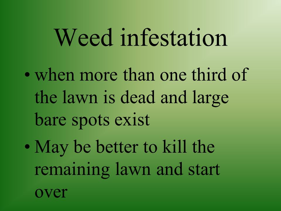 Weed infestation when more than one third of the lawn is dead and large bare spots exist.