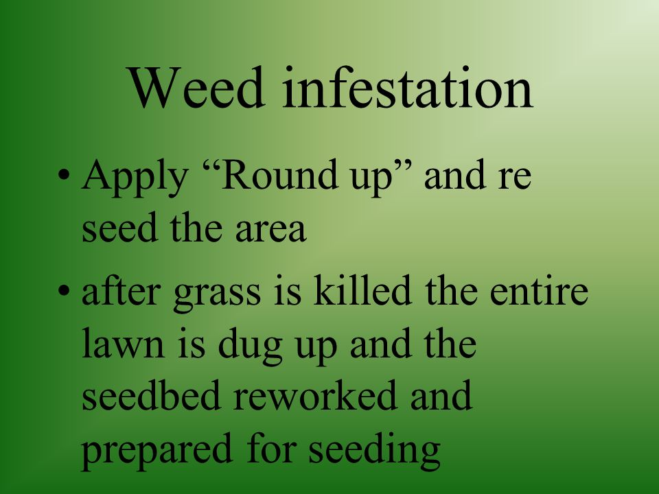 Weed infestation Apply Round up and re seed the area