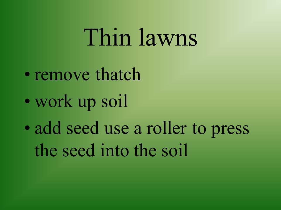 Thin lawns remove thatch work up soil
