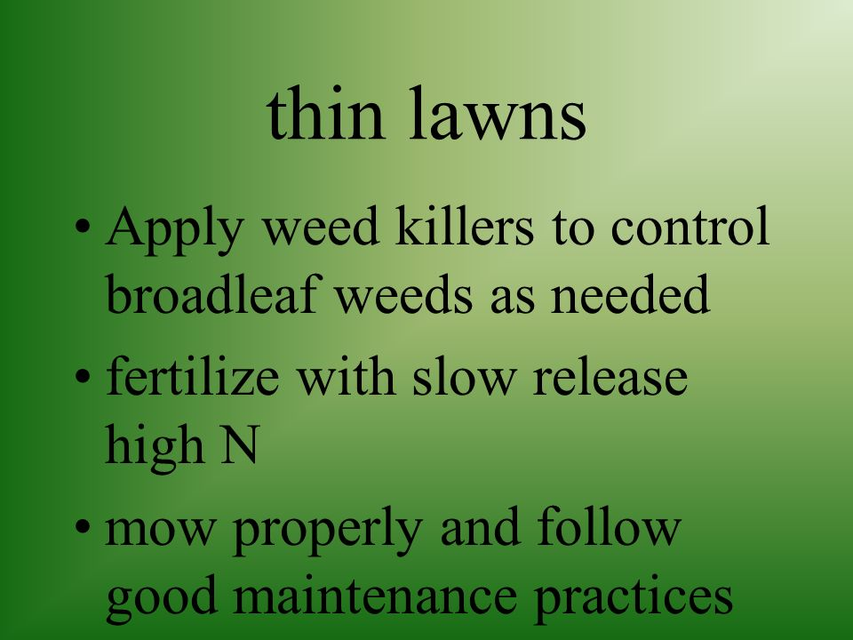 thin lawns Apply weed killers to control broadleaf weeds as needed
