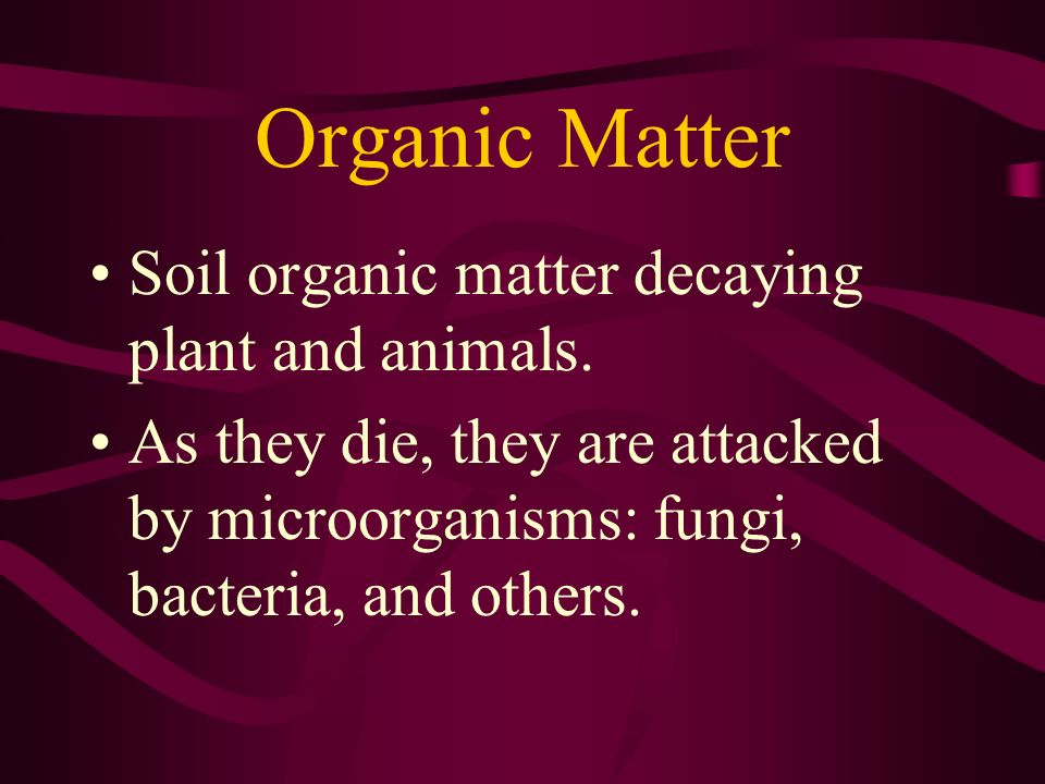 Organic Matter Soil organic matter decaying plant and animals.