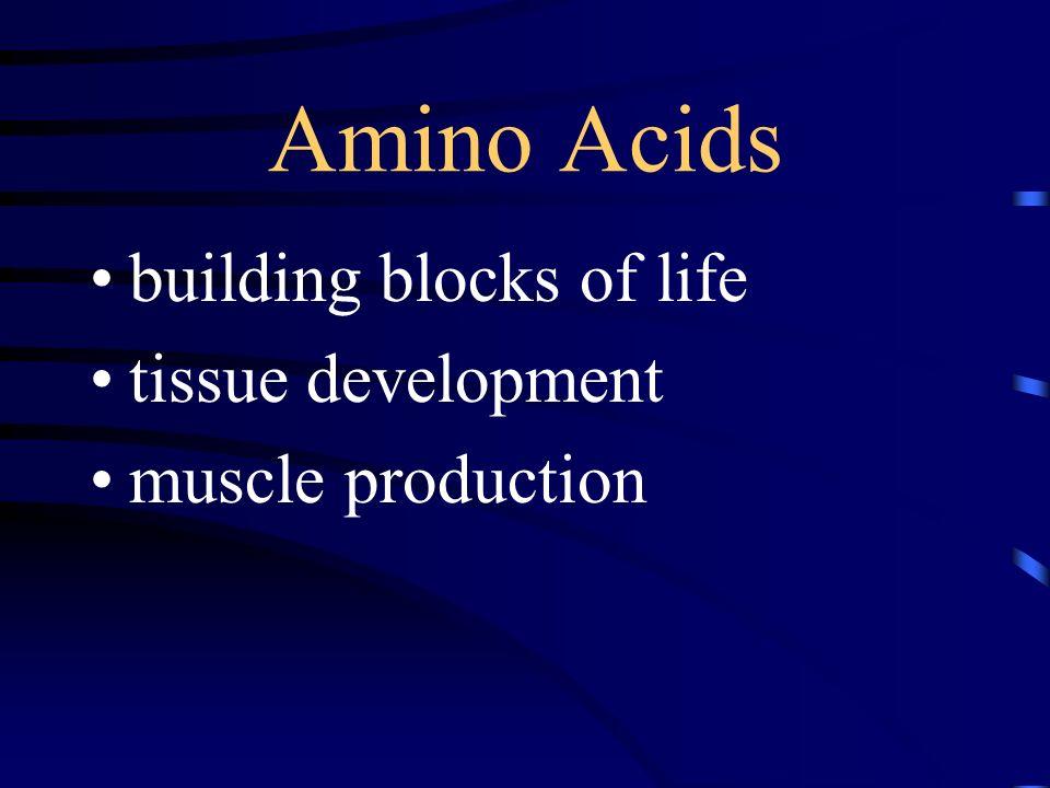 Amino Acids building blocks of life tissue development