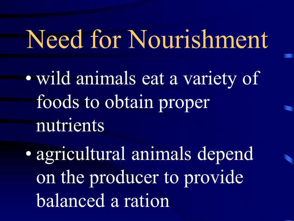 Need for Nourishment wild animals eat a variety of foods to obtain proper nutrients.