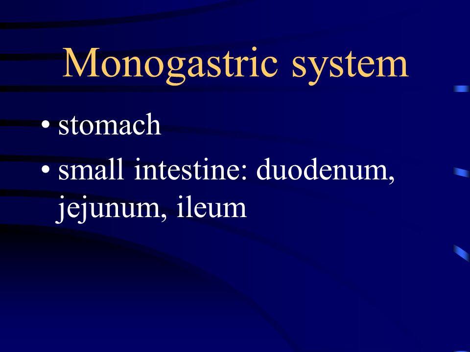 Monogastric system stomach small intestine: duodenum, jejunum, ileum