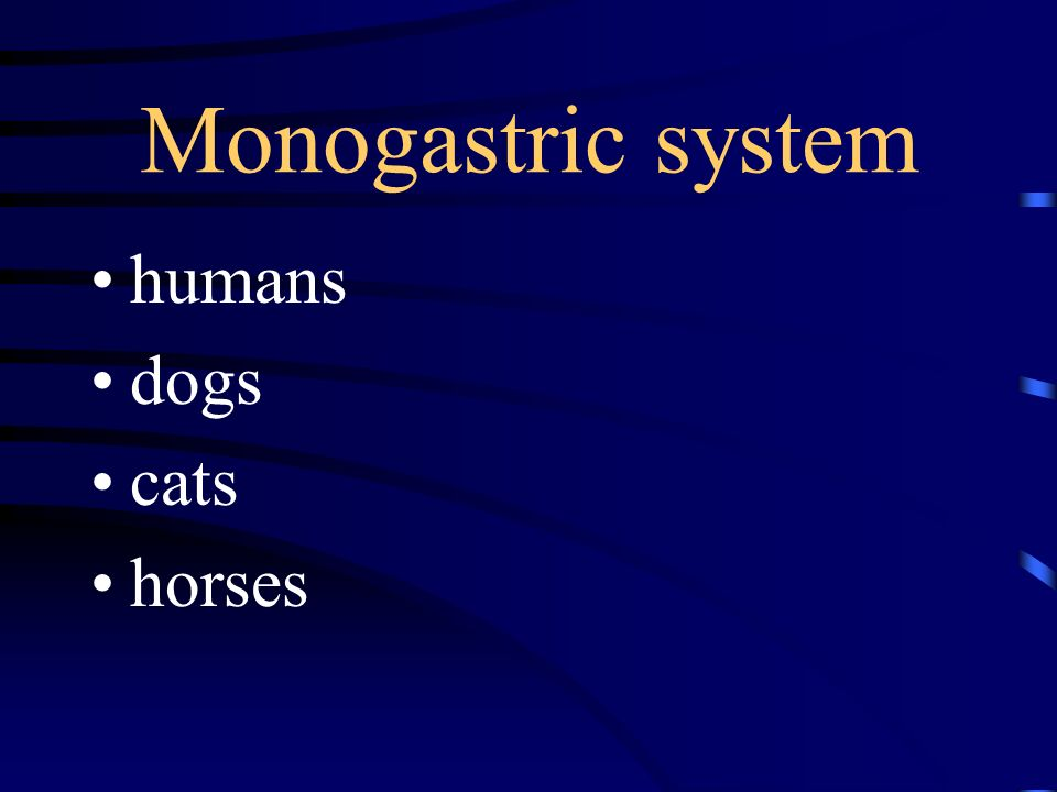 Monogastric system humans dogs cats horses