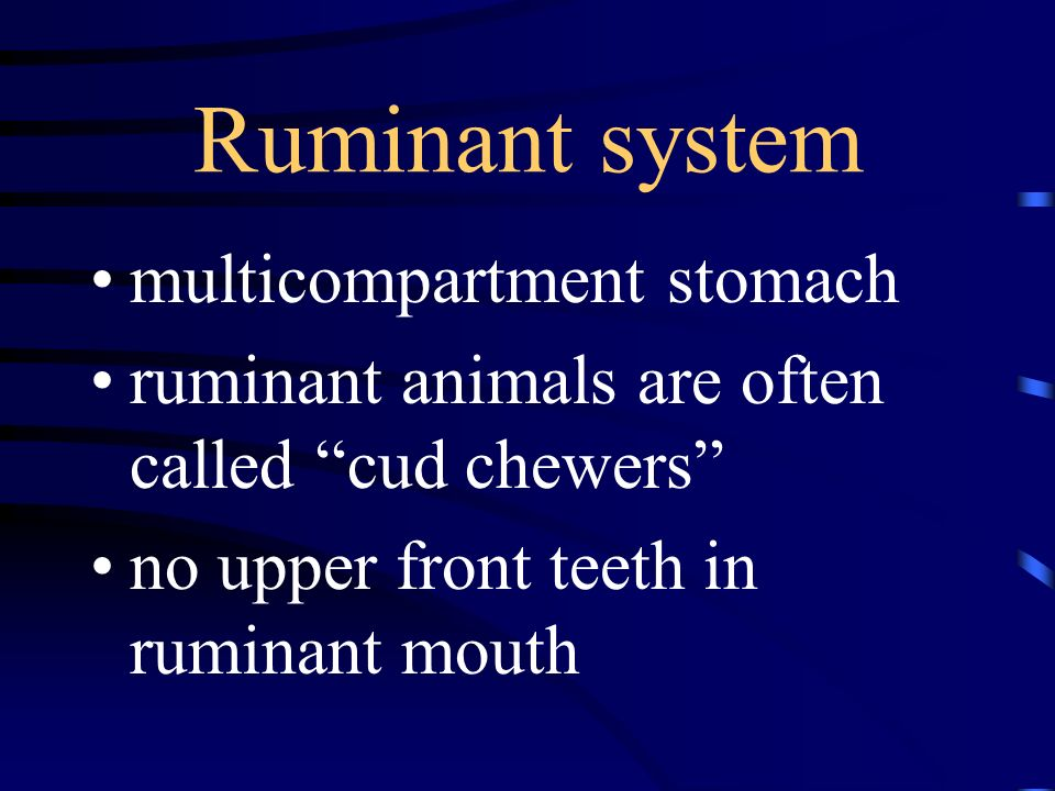 Ruminant system multicompartment stomach