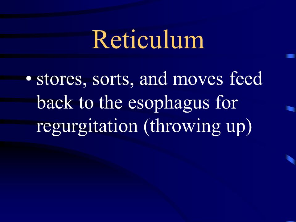 Reticulum stores, sorts, and moves feed back to the esophagus for regurgitation (throwing up)