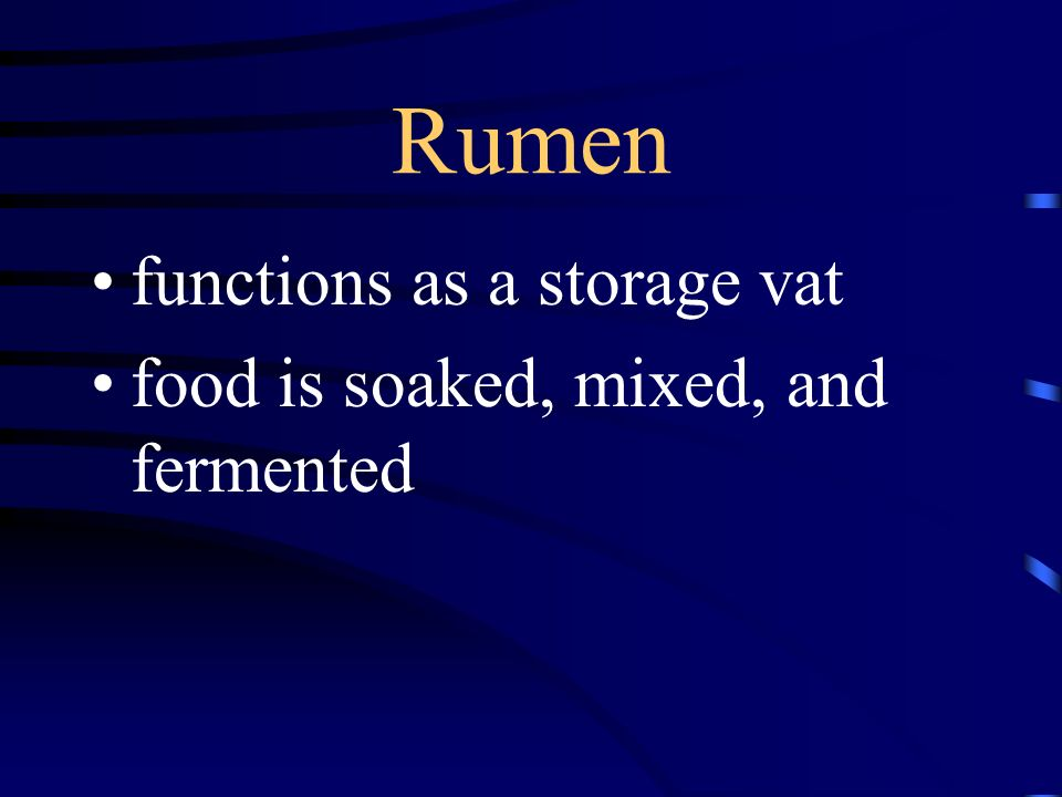 Rumen functions as a storage vat food is soaked, mixed, and fermented